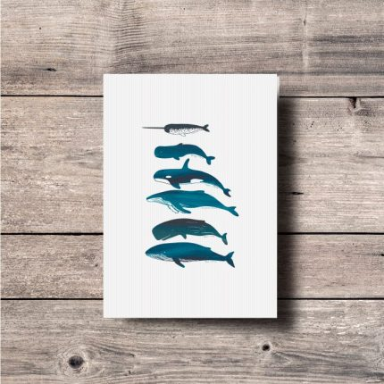 Digital illustration print of different type of Whales by Single Fin Collective